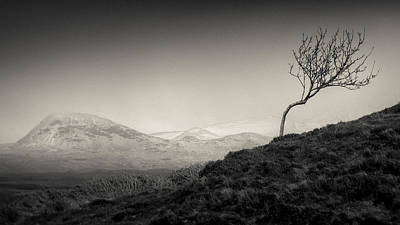 Highland Tree Art Print by Dave Bowman