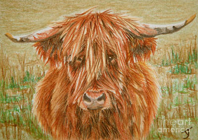 Drawing - Highlander Aceo by Yvonne Johnstone