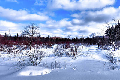 Photograph - Highlights On The Snow by David Patterson
