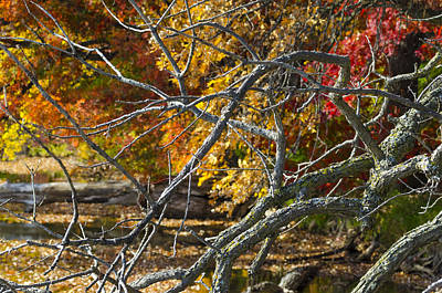 From The Kitchen - Highly Textured Branches Against Autumn Trees by Lynn Hansen