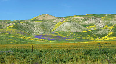 Photograph - Highway 58 Superbloom Panorama by Lynn Bauer