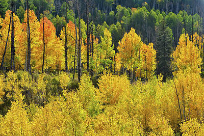Photograph - Highway 62 Aspen Groves by Ray Mathis