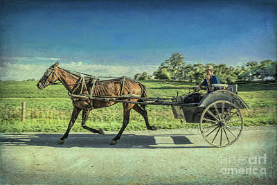 Photograph - Heading Home by Lynn Sprowl
