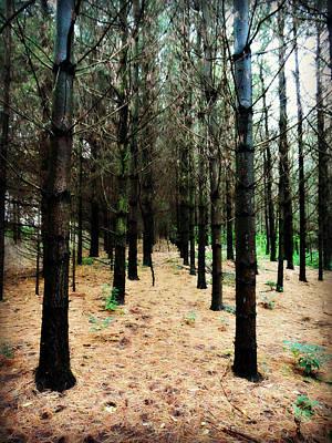 Photograph - Highway Of Pines by Cyryn Fyrcyd