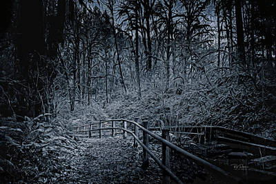 Photograph - Hike In Forest by Bill Posner