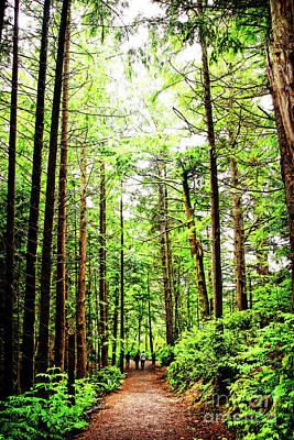 Photograph - Hiking An Old Growth Forest by Lincoln Rogers