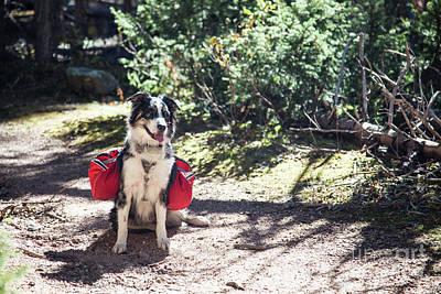 Photograph - Hiking Dog by Olivier Steiner