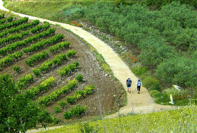 Photograph - Hiking Past Vineyards by Mike Shaw