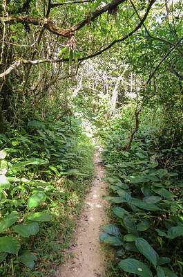 Photograph - Hiking Path In The Atlantic Forest by Helissa Grundemann