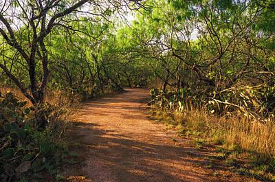 Photograph - Hiking The Camino De Aves by Debra Martz