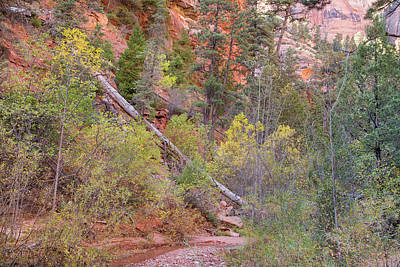 Photograph - Hiking The Kolob Arch Trail by Kunal Mehra