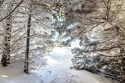 Photograph - Hiking Through A Snow Covered Forest by Serge Skiba