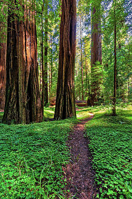 Photograph - Hiking Through California Redwoods by Dan Carmichael