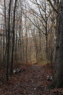 Photograph - Hiking Trail Bench 2 120217 by Mary Bedy