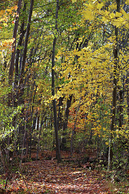Photograph - Hiking Trail Fall 2017 2 by Mary Bedy