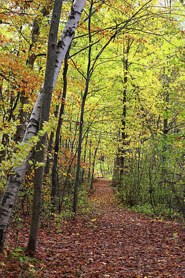Photograph - Hiking Trail Fall 2017 3 by Mary Bedy