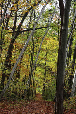 Photograph - Hiking Trail Fall 2017 4 by Mary Bedy