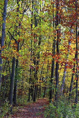 Photograph - Hiking Trail Fall 2017 5 by Mary Bedy