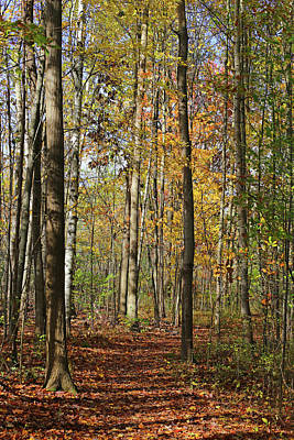 Photograph - Hiking Trail Fall 2017 6 by Mary Bedy