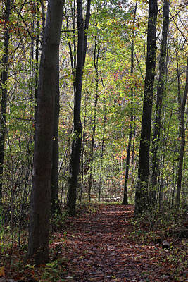 Photograph - Hiking Trail Fall 2017 by Mary Bedy