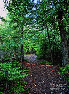 Photograph - Hiking Trail by Gary Wonning
