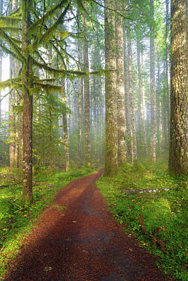 Hiking Photograph - Hiking Trail In Washington State Park by David Gn