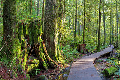 Hiking Photograph - Hiking Trail Through Forest In Lynn Canyon Park by David Gn