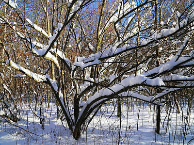 Photograph - Hiking Trail Winter 5 121417 by Mary Bedy