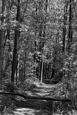 Photograph - Hiking Trail With Fallen Tree Bw 052318 by Mary Bedy