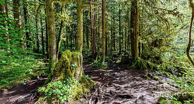 Firefighter Patents Royalty Free Images - Trail in the dense subtropical forest Royalty-Free Image by Viktor Birkus