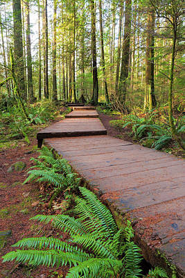 Hiking Photograph - Hiking Trail Wood Walkway In Lynn Canyon Park by David Gn
