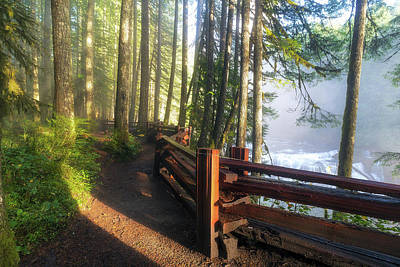 Photograph - Hiking Trails At Lower Lewis River Trail by David Gn