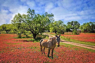 Photograph - Hill Country Horse In Red Paintbrush by Lynn Bauer