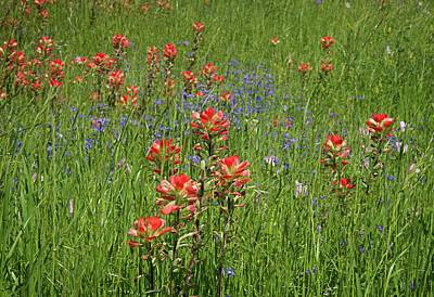 Photograph - Hill Country Paintbrush by Lynn Bauer
