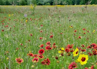 Hill Country Wildflowers Original