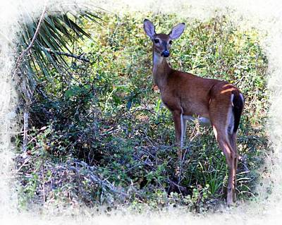 Photograph - Hill Side Doe by Sheri McLeroy