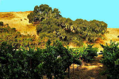 Photograph - hill side vineyard 'n Oaks by Gary Brandes