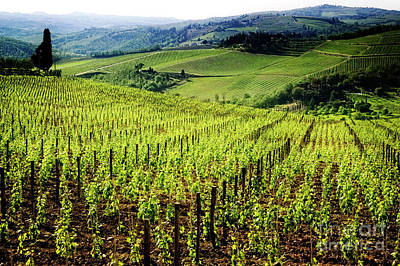 Photograph - Hills Of Chianti by Scott Kemper