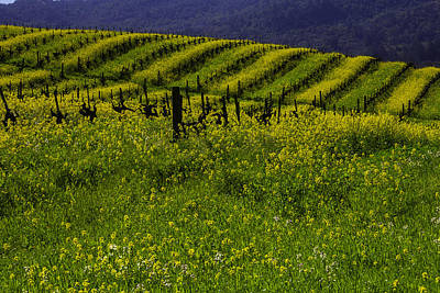 Sonoma County Photograph - Hills Of Mustard Grass by Garry Gay