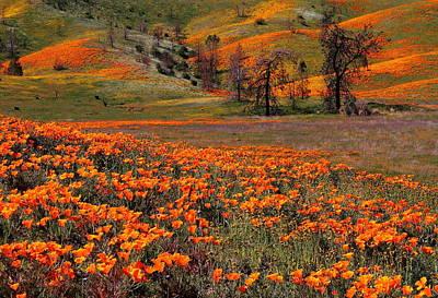 Hills Of Orange Near Antelope Valley Poppy Preserve In California Art Print by Jetson Nguyen