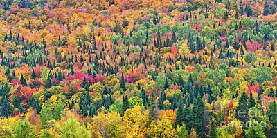 Photograph - Hillside Fall Color by Alan L Graham