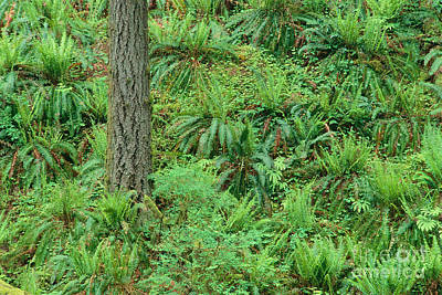 Hillside Ferns Art Print by Greg Vaughn - Printscapes