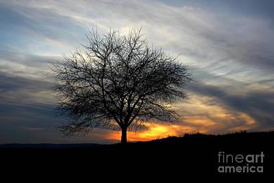 Art Print featuring the photograph Hillside Morning by Everett Houser