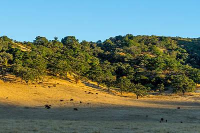 Photograph - Hillside Pasture by Derek Dean