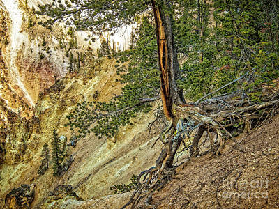 Photograph - Hillside Pine by Sandra Selle Rodriguez