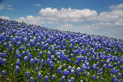 Photograph - Hillside Texas Bluebonnets by David and Carol Kelly