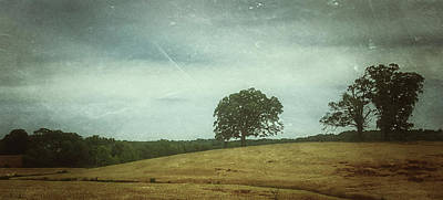 Photograph - Hillside Tree 2 by E Karl Braun