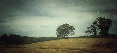Photograph - Hillside Tree 3 by E Karl Braun