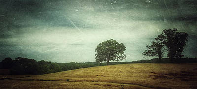 Photograph - Hillside Tree 4 by E Karl Braun