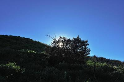 Photograph - Hillside Tree - Blacklit by Matt Harang